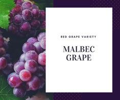 Nho Malbec Grape