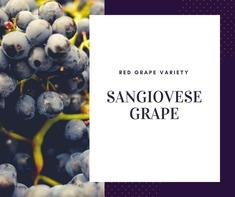 Nho Sangiovese Grape