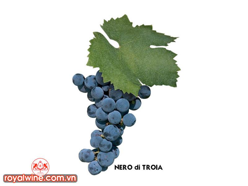 Đặc Tính Của Nho Và Rượu Nho Nero di Troia