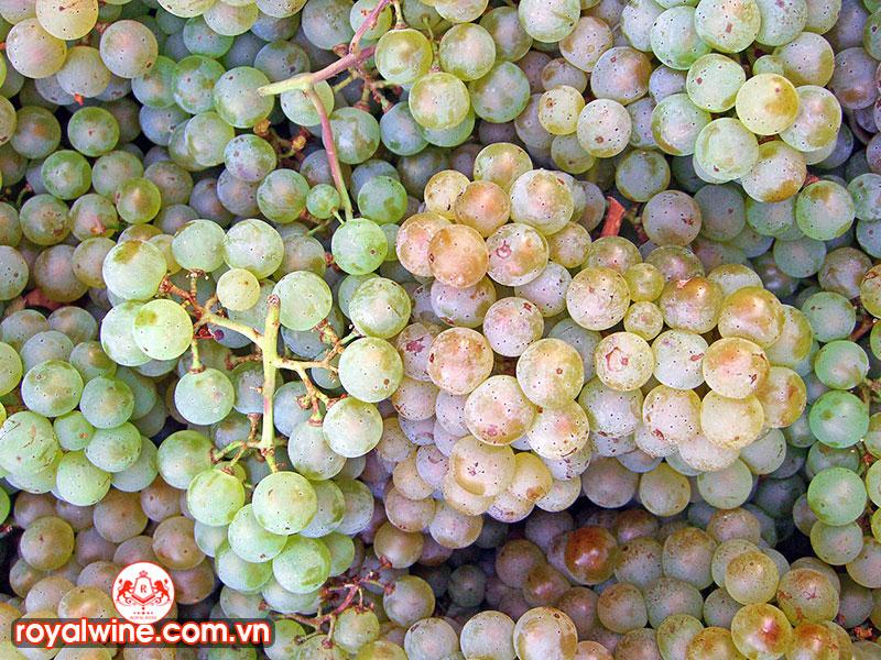 Ghép Nối Các Thực Phẩm Từ Giống Nho Pinot Blanc