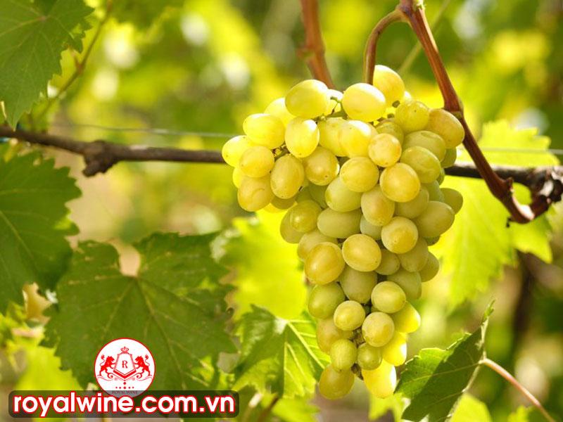 Những Món Ăn Thường Được Dùng Với Rượu Chenin Blanc