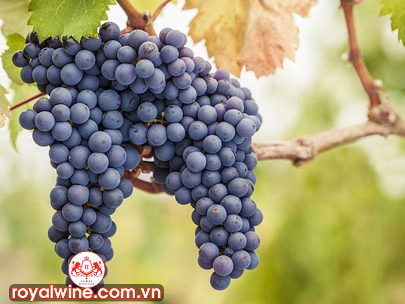 Những Vùng Trồng Nho Veronese Và Các Loại Rượu Vang Nổi Tiếng