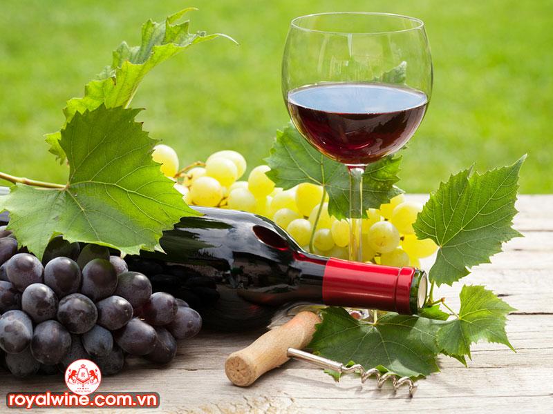 Những Giống Nho Làm Rượu Vang Hiện Nay?